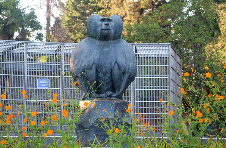 Питомник обезьян Сухум
