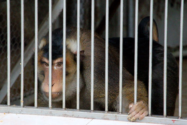 Питомник обезьян в Сухуме: отзывы и фото