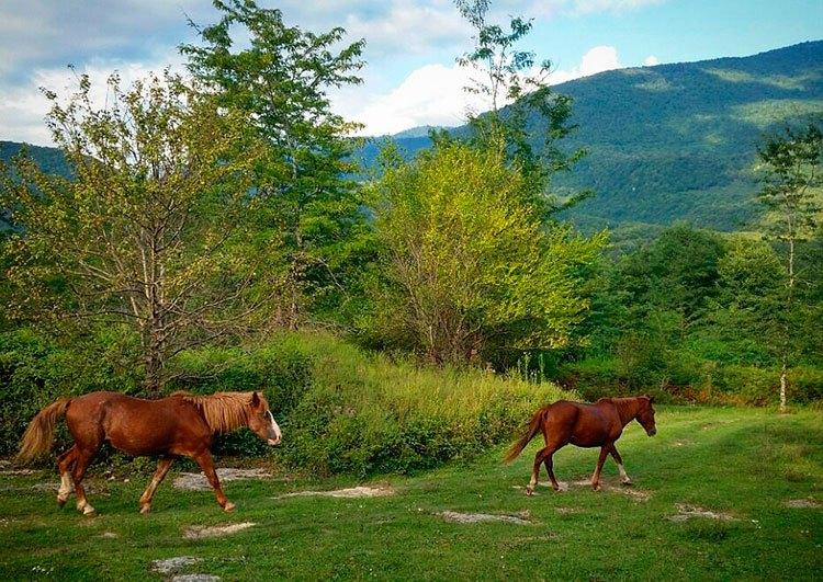 Индивидуальные экскурсии по Абхазии